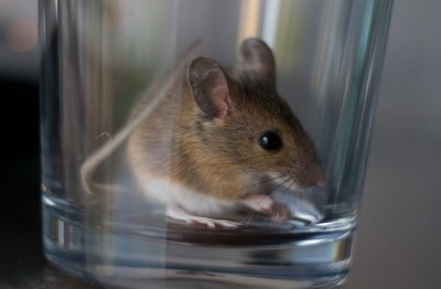0104_mouse