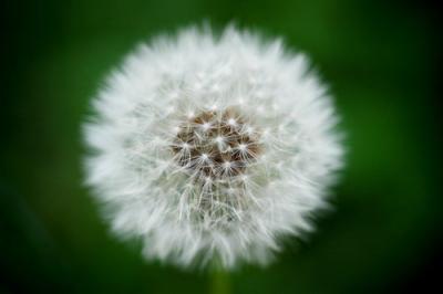Nikon_D40_70mm