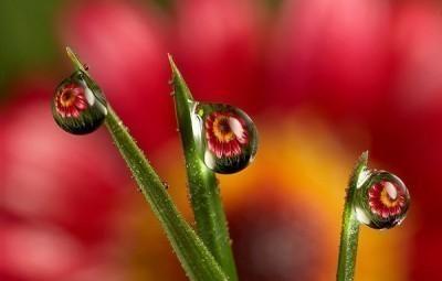 flower-focus