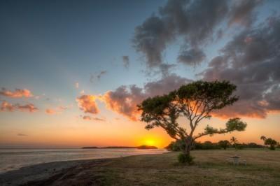 sunset-tree