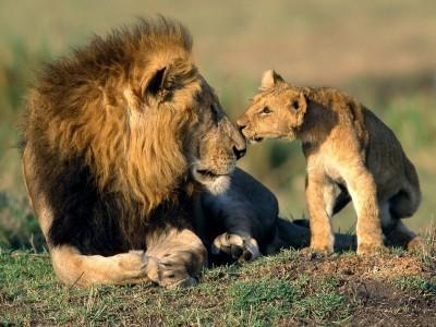 wild-animals-1