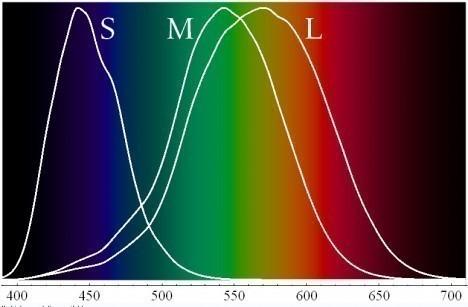Спектры_чувствительности_и_длины_волн_света