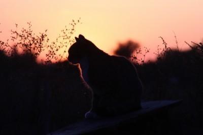 Eine Silhouette einer Katze Katze Katze Silhouette