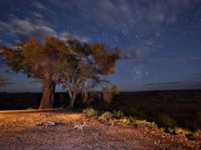 landscape-night