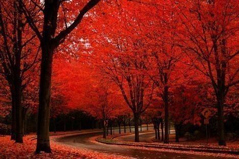 beautiful-photography