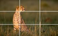 применение правила третей в фотографии