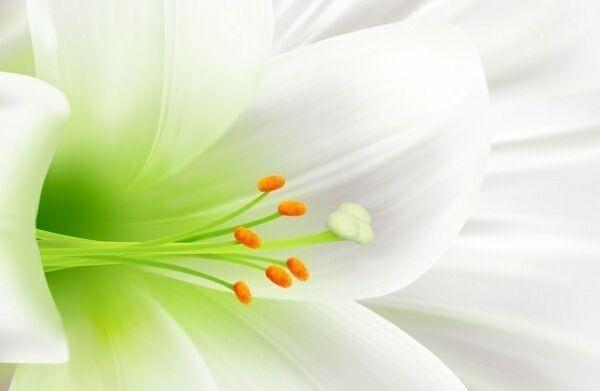Съемка дикорастущих цветов