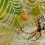 Съемка пауков утром