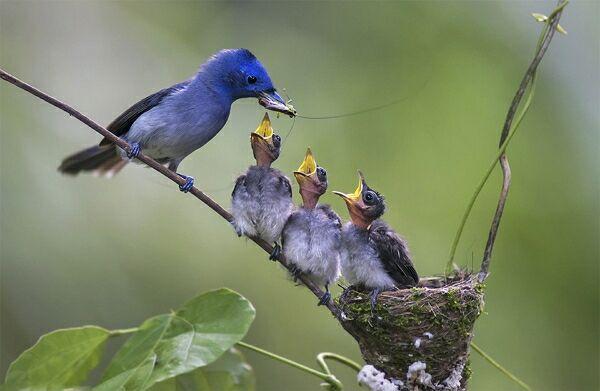Съемка птиц в саду