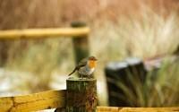 Фотосъемка птиц