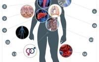 Аллопланты в регенеративной хирургии