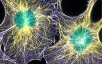 Язык общения раковых клеток