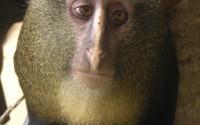 10 самых впечатляющих животных и растений