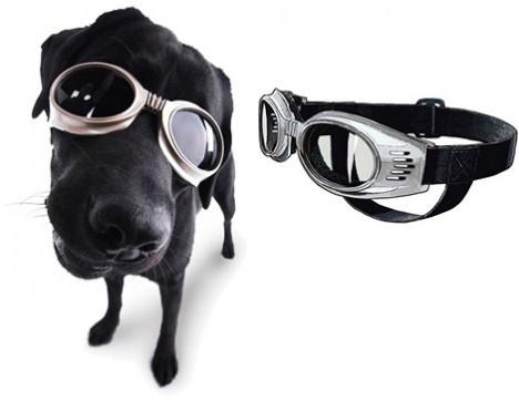 dogs-sunglasses