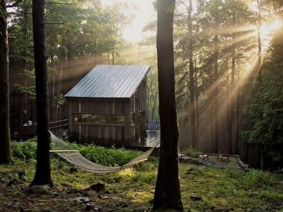 дома-в-лесу