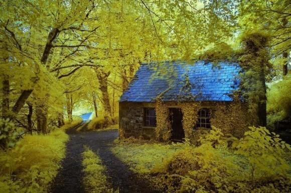 красивые-дома-в-лесу