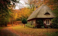 Самые красивые лесные дома