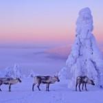 Удивительная Финляндия