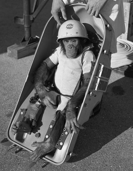 Ham_the_chimp