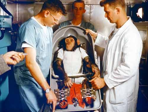 chimp-space