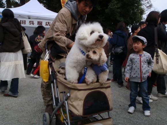 dogs-japan