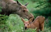 Примеры сурового воспитания у животных