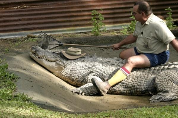 ферма-крокодилы