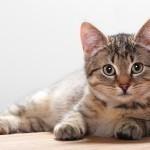 Причины аллергии у кошек и борьба с ней