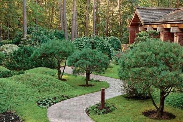 Растения в ландшафтном дизайне Дизайн