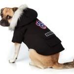 Одежда для собак: практично и красиво.