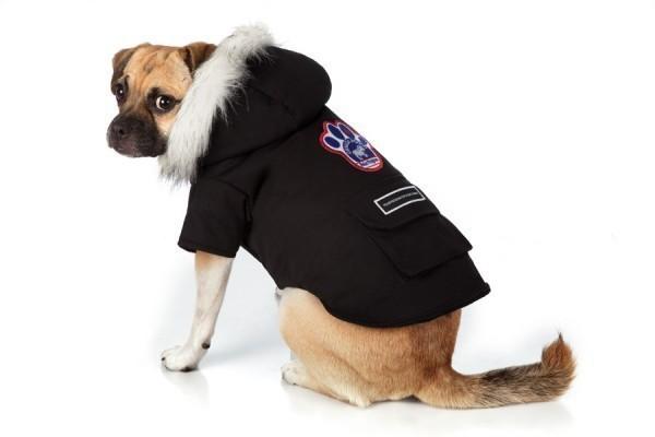 одежда для собак