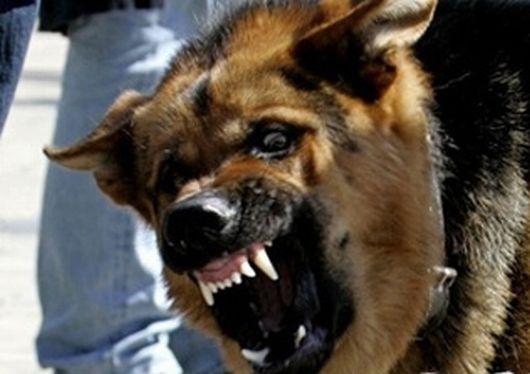 усыпление собак