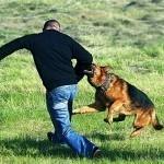 Что такое ультразвуковой отпугиватель собак и какой у него принцип работы?