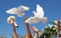 Свадебный голубь – признак верности!