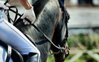 Чем полезны конные прогулки