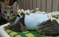 стерилизованная кошка