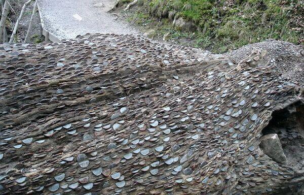 денежное дерево Великобритания