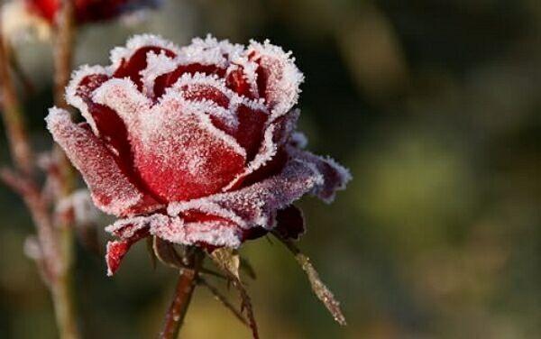 купить цветы в Краснодаре