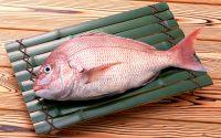 Морской окунь: интересные факты и особенности рыбы