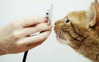 С какого возраста вести котенка к ветеринару?