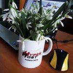 HyperHost - интересный обзор отличного хостинга