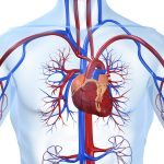 Как предупредить болезни сердца?