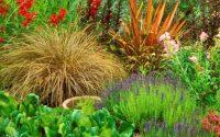 Многолетние растения: что посадить на своем участке?
