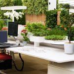 Как озеленить офис