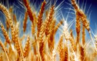 Рынок зерновых культур в Российской Федерации