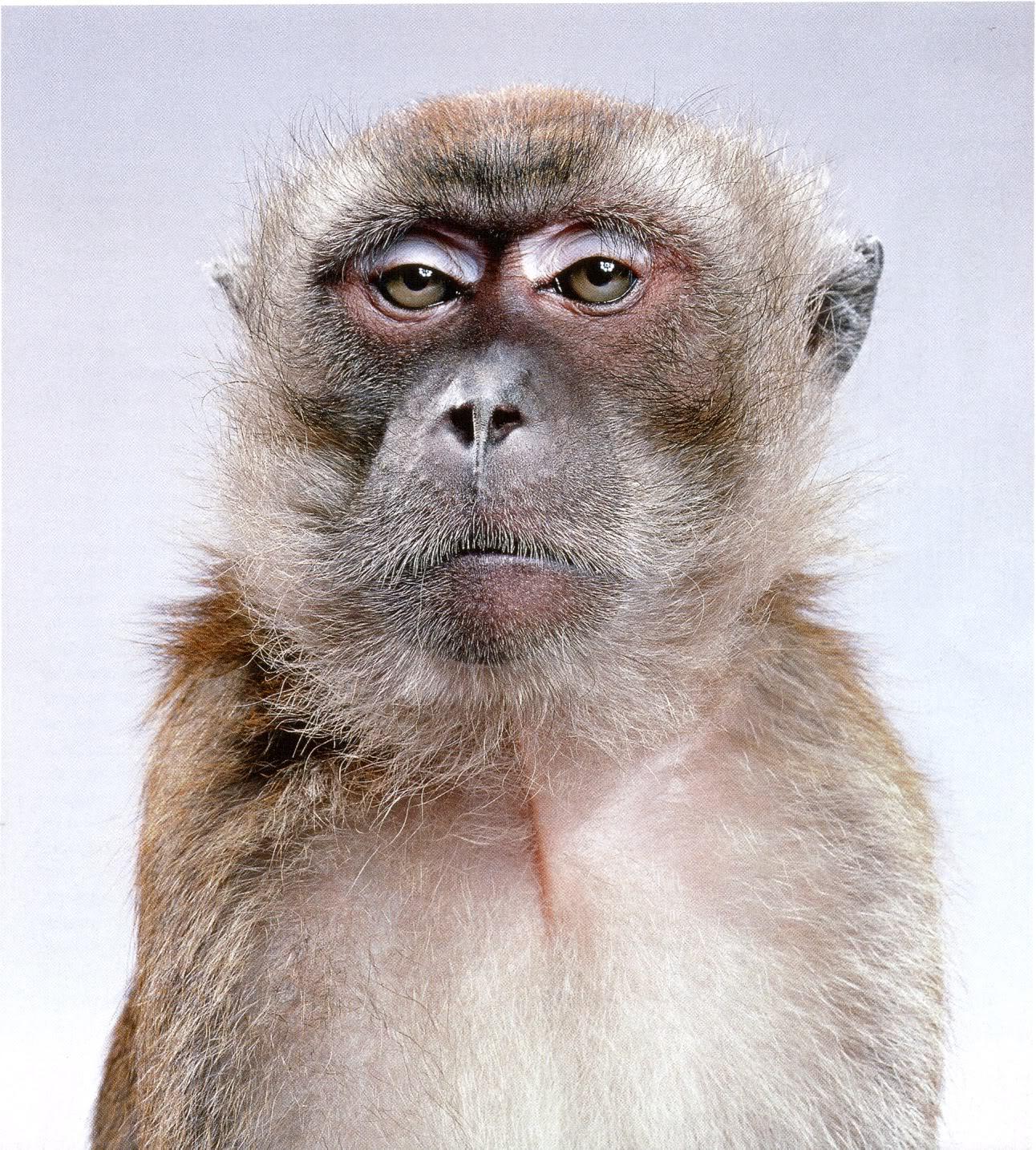 Фото офисных работников с приколом в роле обезьян 4