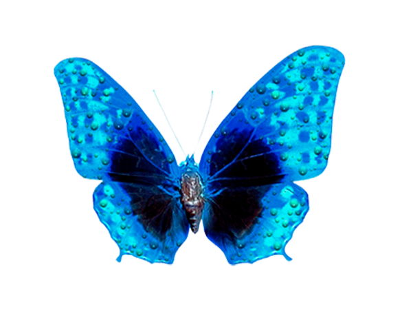 Картинка бабочки гиф