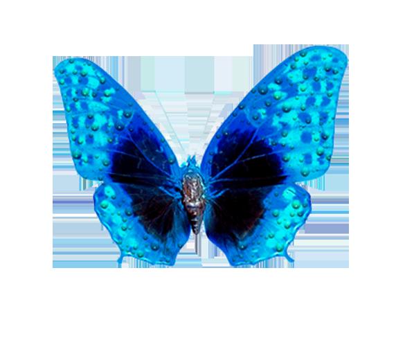 Картинки для, картинки бабочки на прозрачном фоне анимация