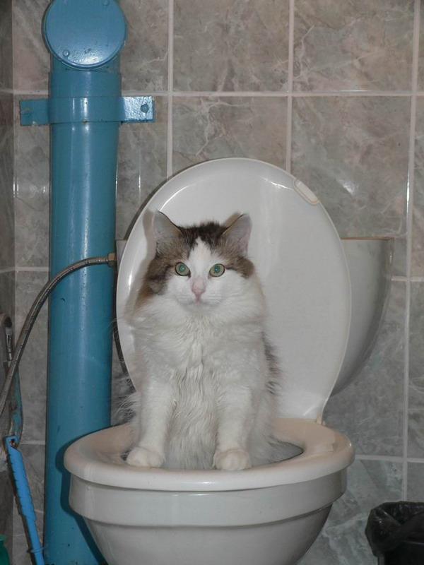 Как быстро сходить в туалет по маленькому 1 литр воды