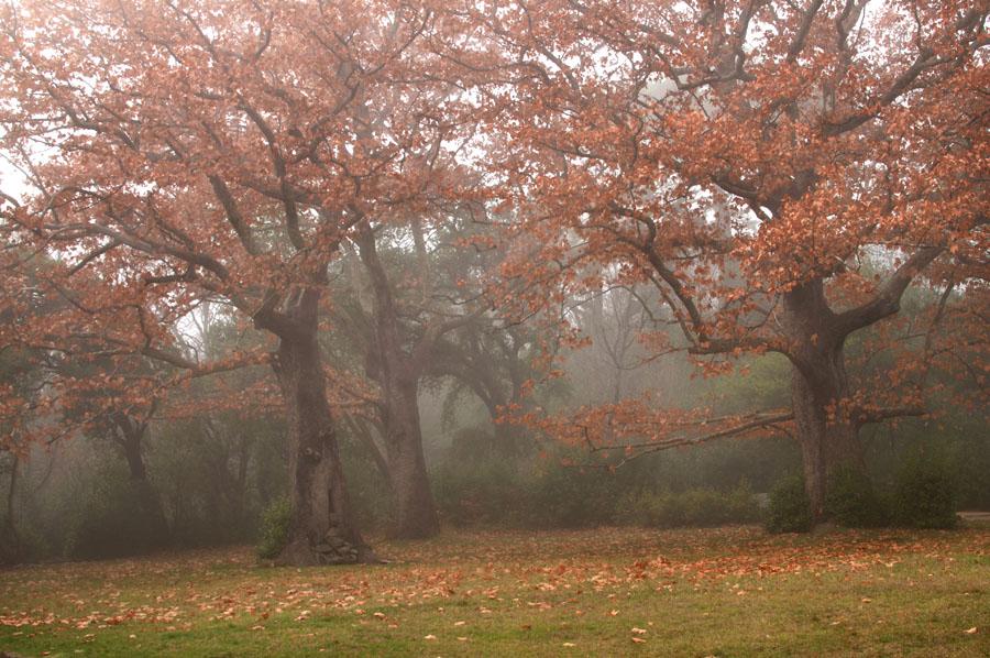 http://hostingkartinok.com/uploads/images/2011/12/2e4c3c92c20aeaad889c1a5f8967b292.jpg